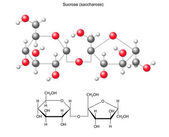 Structural chemical formula and model of sucrose (saccharose) — Stockvektor