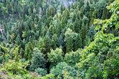 Berg bos abchazië — Stockfoto