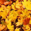 Stock Photo: Colors of autumn