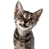 Gray striped kitten with a displeasure grimace — Stock Photo