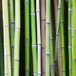 Bamboo tree wood background — Stock Photo
