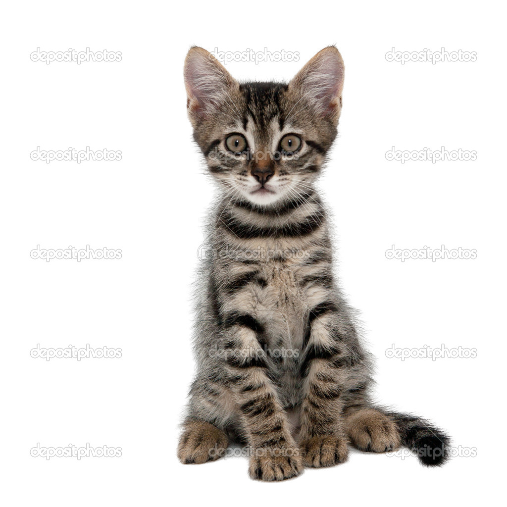 Gray And Black Striped Cat