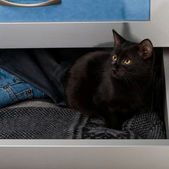 Black kitten in the open drawer — Stock Photo