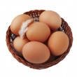 Easter egg and feather in basket — Stock Photo