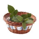 Fresh branch of laurel in the basket — Stock Photo
