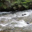 Flowing mountain stream — Stock Video