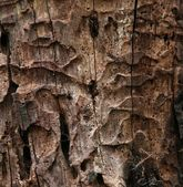Decaying tree trunk texture — Stock Photo
