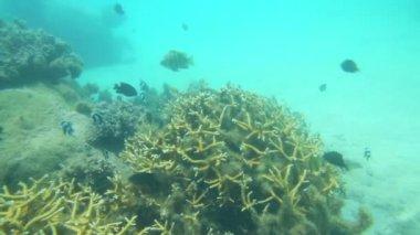 Underwater life — Stock Video