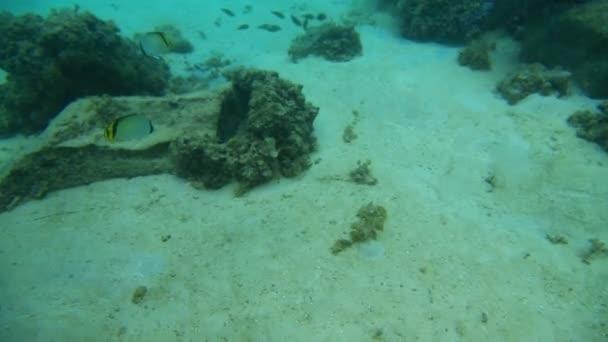 Vida submarina — Vídeo de stock
