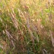 Stock Video: Rippling grass background