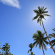 Sunny tropical day — Stock Photo #32534817