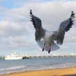 Seagull landing — Stock Photo #40829213