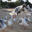Seagull fight — Stock Photo #40830117