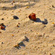 Stones on the sand — Stock Photo