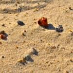 Stones on the sand — Stock Photo