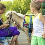 Little boy looks at pony — Stock Photo