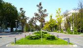 Green plants valley in Ukraine — Stock Photo