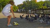 Little girl feed pigeons — Stock Photo