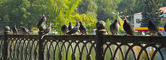 Pigeons on the fence in the park — Stock Photo