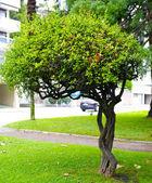 Nice tree in Lugano, Switzerland — Stock Photo