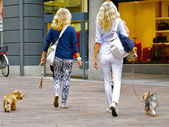 Two blonds with two dogs — Stock Photo