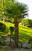 Beautiful palms from Switzerland — Stock Photo