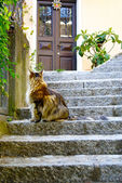 Old cat on the stairs — Stock Photo