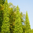 Three trees of different sizes — Stock Photo #12758517