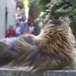 Big fat cat lays and relaxes — Stockfoto