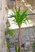 Plants grow in Gandria, Switzerland — Stock Photo