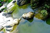 Stones in the lake — Stock Photo