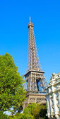 Eiffel tower behind the tree — Stock Photo