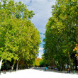 Green trees of the Retito park — Foto de Stock