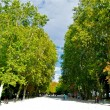 Постер, плакат: Green trees of the Retito park