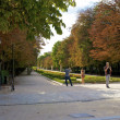 Alley in the Retiro park - Stock Photo