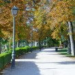 Alley in the Retiro park, Madrid - Stock Photo