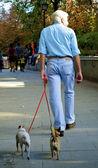 Een man en twee honden — Stockfoto