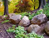 Big stones on the ground — Stock Photo