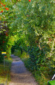 Rowanberry alley — Stock Photo
