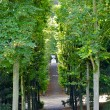 Nature of a Parc de Saint-Cloud, Paris, France - Stock Photo