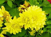 Piękne żółte kwiaty — Zdjęcie stockowe