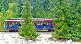 Disneyland train in the wood — Stock Photo