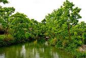 Lake en de bomen — Stockfoto