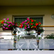 Flowers on the balcony - Stock fotografie