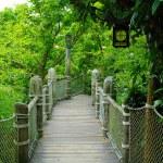 Rope bridge — Stock Photo #13658680