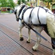 White horse in Disneyland — Stockfoto