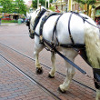 Stock Photo: White horse in Disneyland