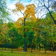 Autemn forest, tree, yellow leaves and blue sky — Stock Photo