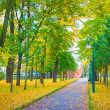 Road in the park with green and yellow trees and fallen leaves — Foto Stock
