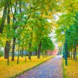 Road in the park with green and yellow trees and fallen leaves — Foto de Stock